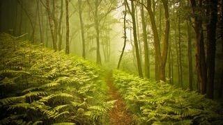 wildernesspathwayswallpapercollectionseriestwo01
