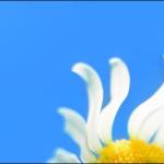 windows taskbar customization 150x150 به راحتی در اکسل  ۲۰۱۳ کاربرگ یا worksheet را کپی یا انتقال دهید