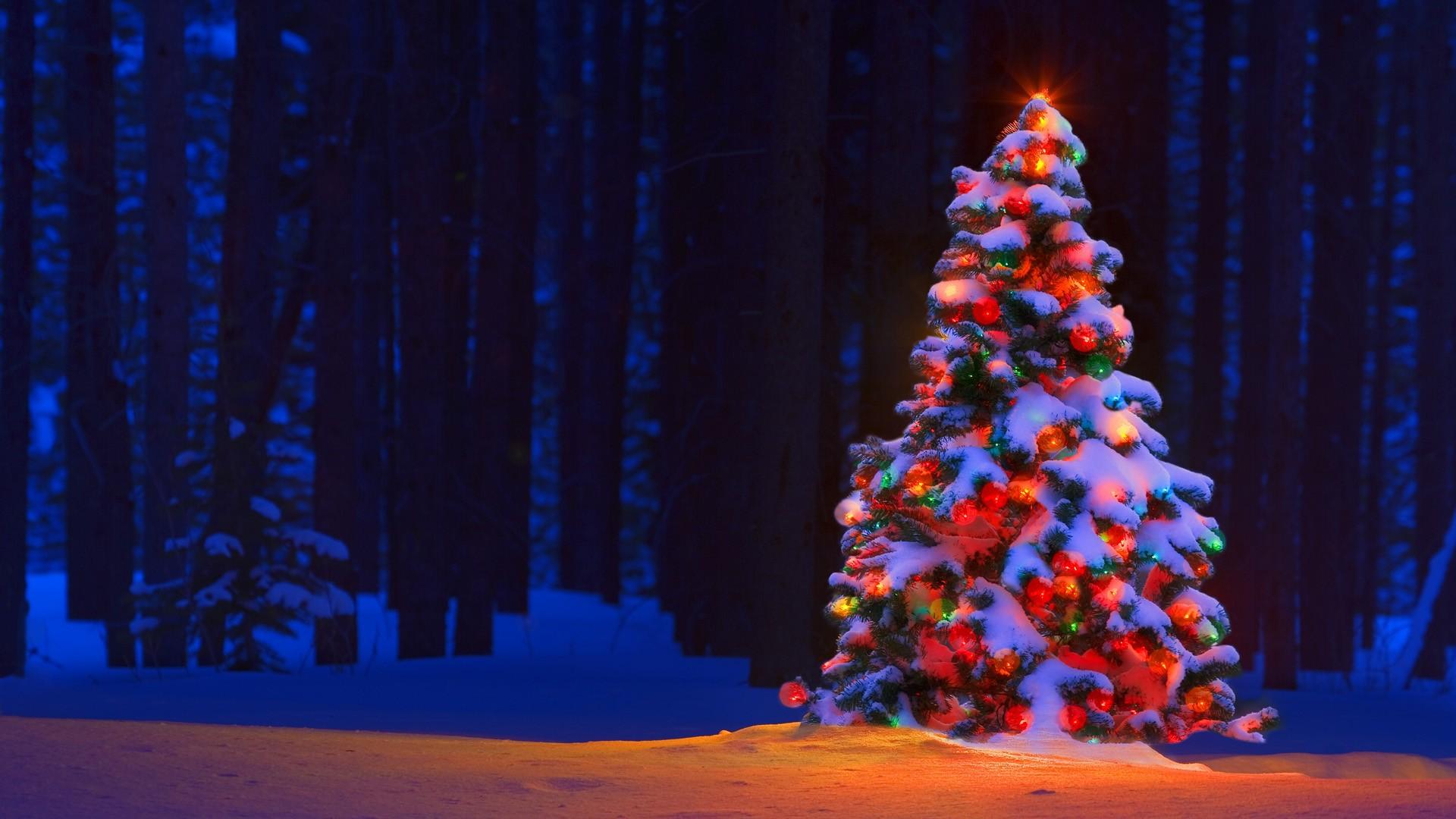 big afdf0b76000d1975aaad76b8b9ad53bac5ab07cd مجموعه تصاویر کریسمس در سال 2013 (20 تصویر)