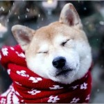christmas2013wallpapercollectionbonusedition00 150x150 عملکرد آنتی ویروستان را خودتان آزمایش کنید!