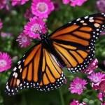 colorfulbutterflieswallpapercollectionseriestwo00 150x150 8oot Logo:نرم افزاری برای سفارشی کردن لوگو در ویندوز 8 و 8.1