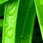 fieldsofgrasswallpapercollectionforiphoneseriesone00 150x150 آموزش ترفندهای جالب و کاربردی در گوشی اندروید