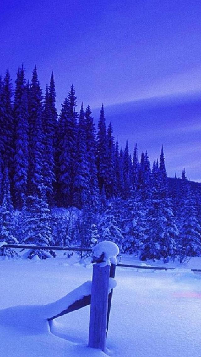 trees مجموعه والپیپر با موضوع زمستان برای iPhone
