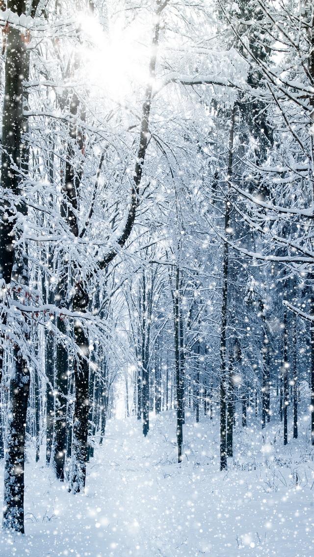 winter trees مجموعه والپیپر با موضوع زمستان برای iPhone