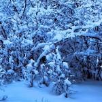 winterwonderlandwallpapercollectionforyouriphoneseriesone00 150x150 مجموعه والپیپر کف فلزی برای آیفون سری 1 (16 عکس)